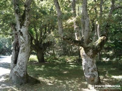 Parque Natural Gorbeia - Hayedo de Altube - Cascada de Gujuli;viajes con amigos turismo naturaleza e